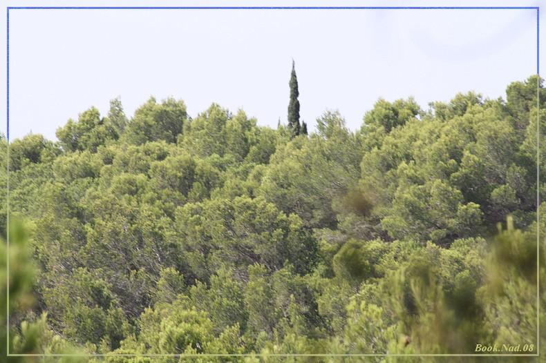Les arbres en général 04082012