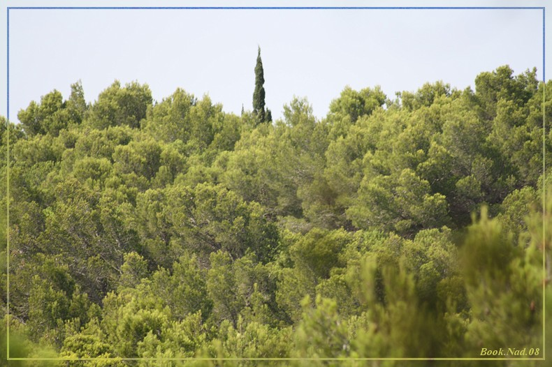 Les arbres en général 04082014