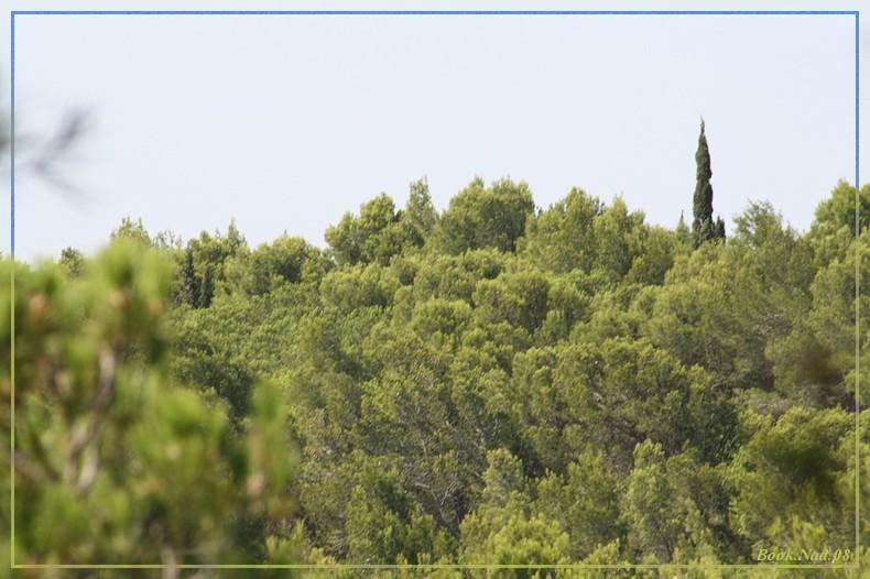 Les arbres en général 04082015