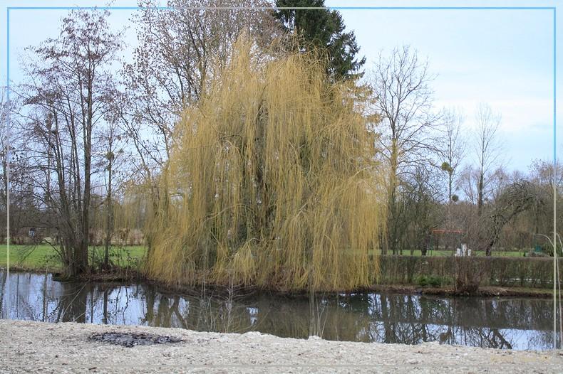 Les arbres en général 13022011