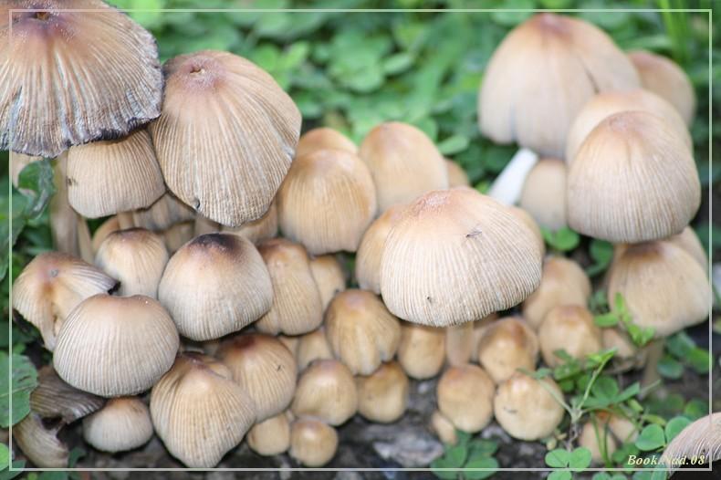 Les champignons 13092010