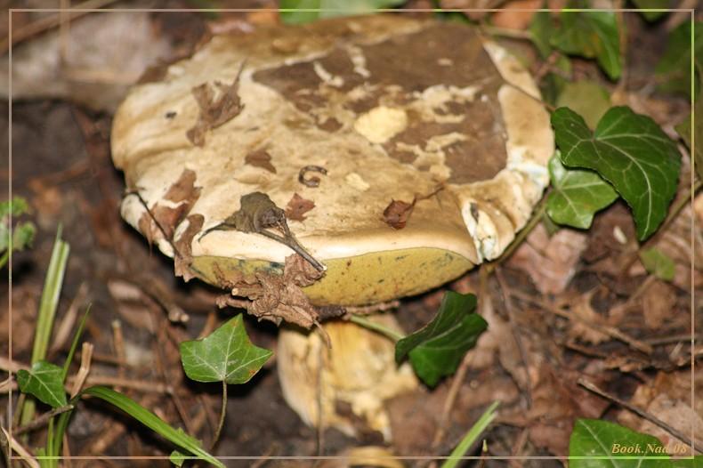 Les champignons 14092012