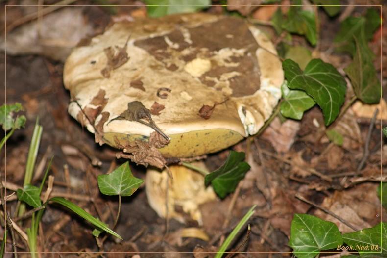 Les champignons 14092013