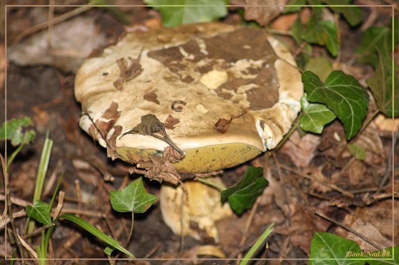 Les champignons 14092014