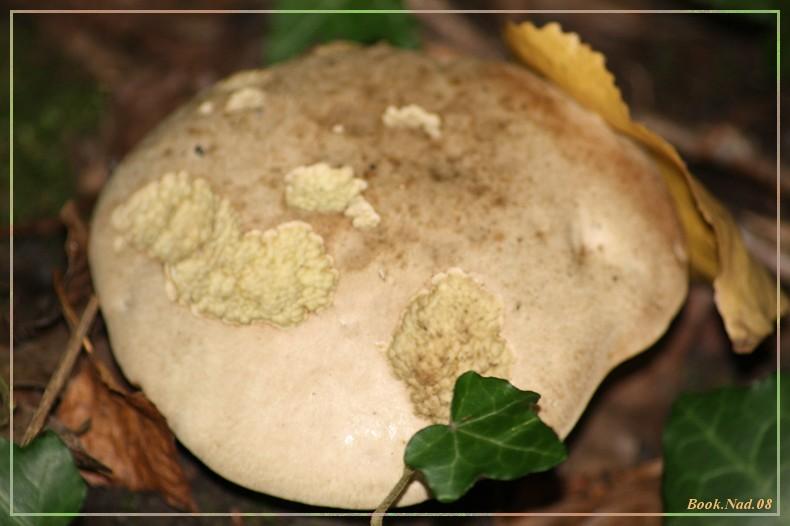 Les champignons 14092015