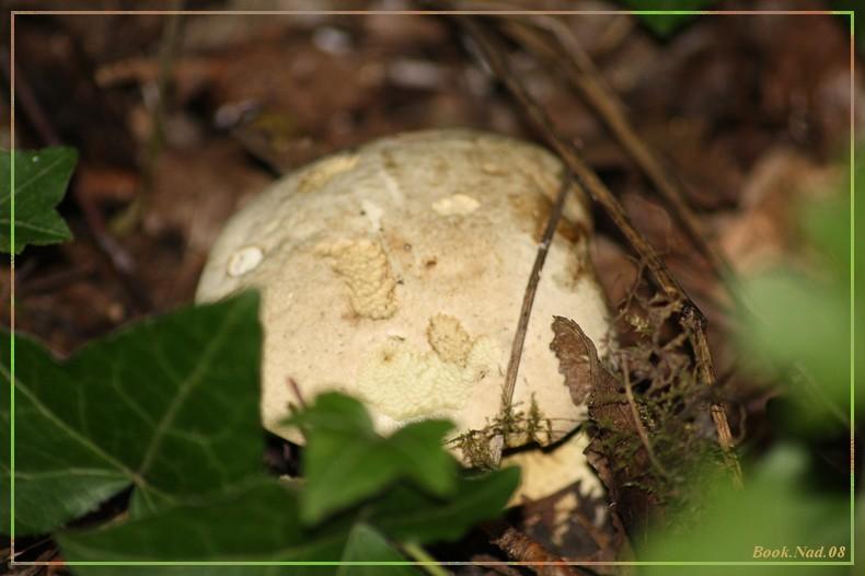 Les champignons 14092016