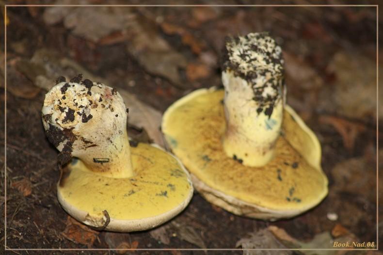 Les champignons 14092021