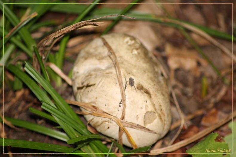 Les champignons 14092022