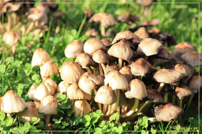 Les champignons 18082010