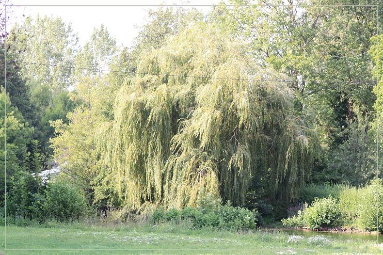 Les arbres en général 18082011