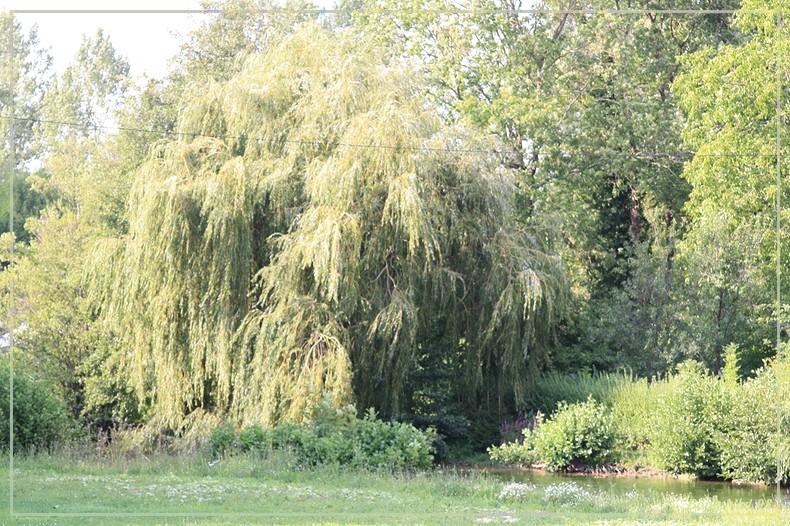 Les arbres en général 18082012