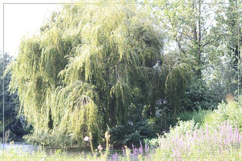Les arbres en général 18082013