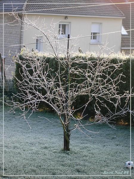 Les arbres en général 2007_310