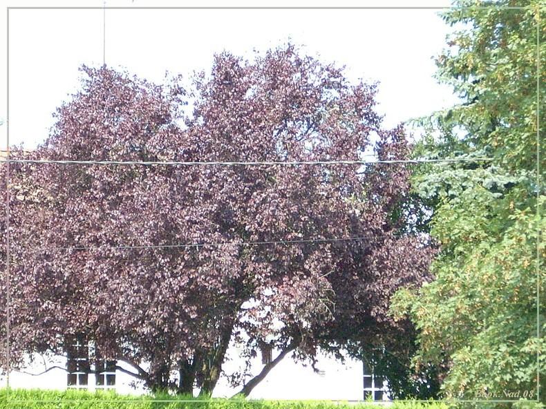Les arbres en général 27080712