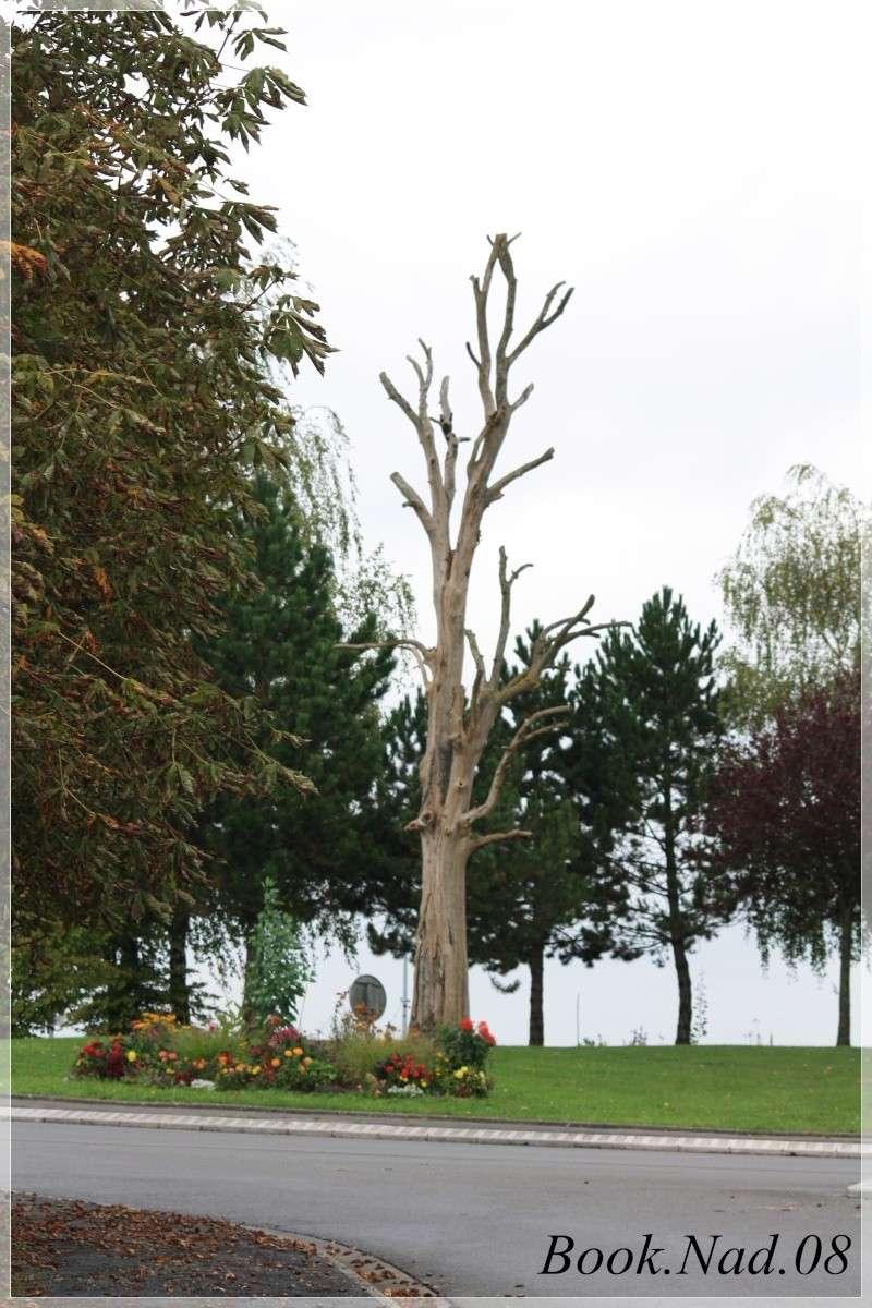 Les arbres en général Photoc57