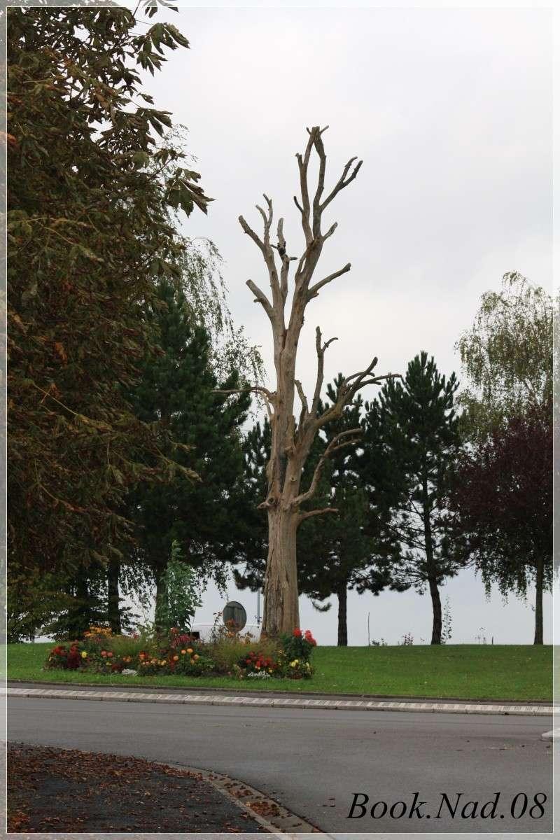 Les arbres en général Photoc58