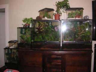 mon salon de terras Pict0012