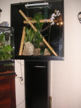 mon salon de terras Pict0013