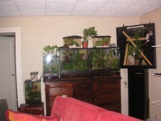 mon salon de terras Pict0014