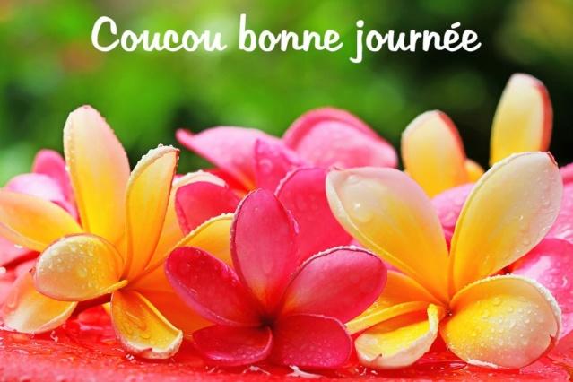 Bonjour - Page 9 Bc9d6910