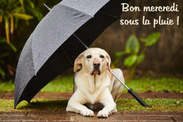 Ici on se dit bonjour  - Page 40 Bon-me12