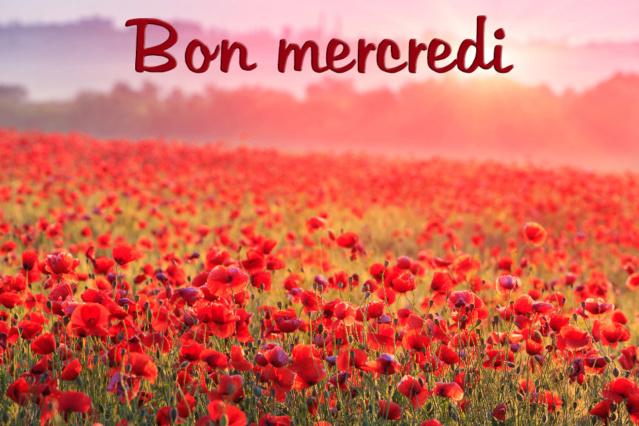Ici on se dit bonjour  - Page 12 Bon-me13