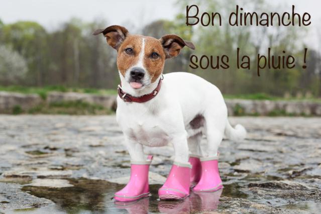 Ici on se dit bonjour  - Page 40 Bonjou25