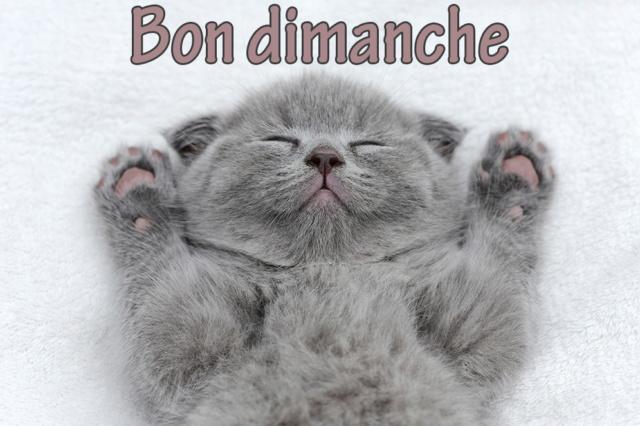Ici on se dit bonjour  - Page 38 Cartes10