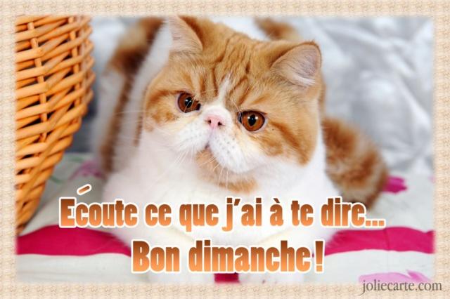 Ici on se dit bonjour  - Page 38 Dimanc11
