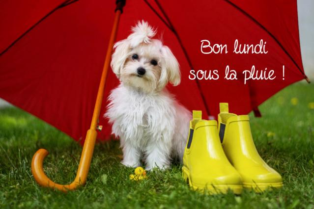 Ici on se dit bonjour  - Page 40 Image-36
