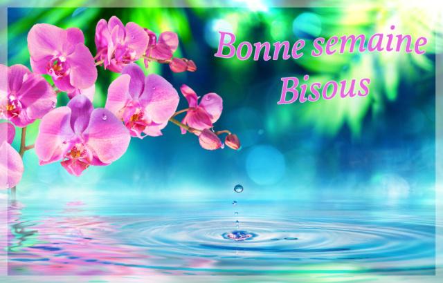 Ici on se dit bonjour  - Page 12 Images12
