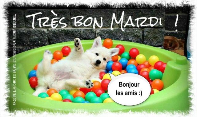 Ici on se dit bonjour  - Page 12 Mardi_13