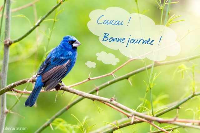 Ici on se dit bonjour  - Page 39 Oiseau10