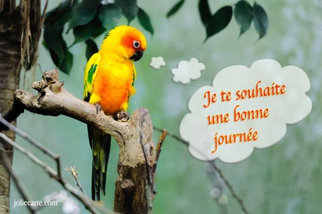 Ici on se dit bonjour  - Page 40 Souhai10