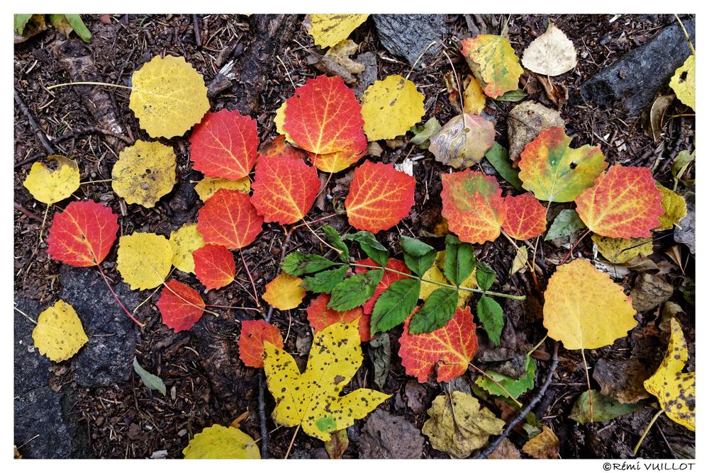 les Ecrins de toutes les couleurs (38) oct 2018 18-10-21