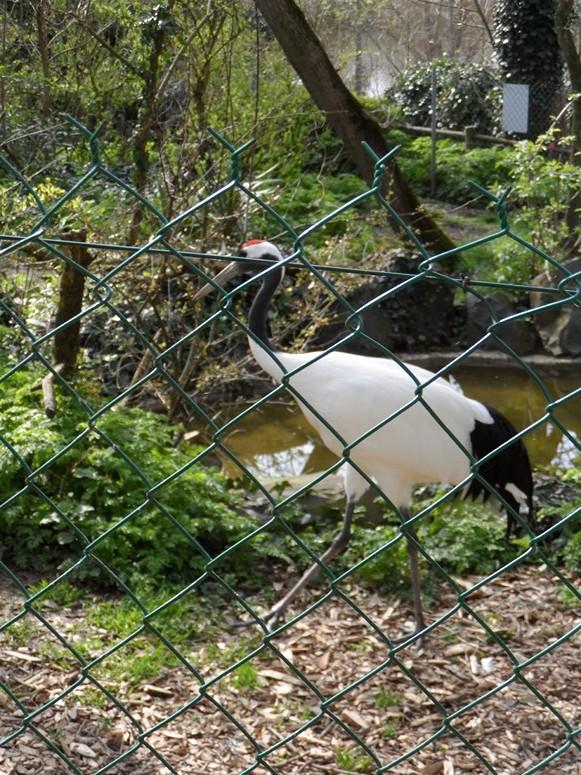 ma visite au zoo des Sables d'Olonne Sam_0016