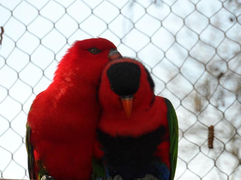 ma visite au zoo des Sables d'Olonne Sam_0017