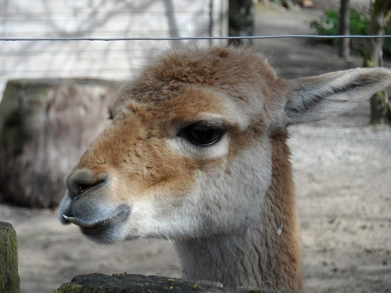 ma visite au zoo des Sables d'Olonne Sam_0018