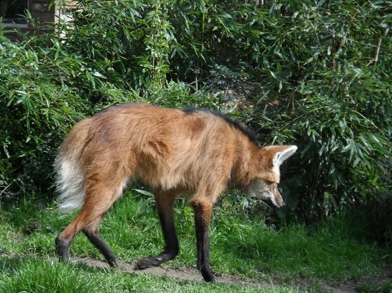 ma visite au zoo des Sables d'Olonne Sam_0020