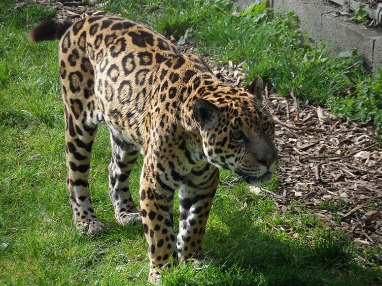 ma visite au zoo des Sables d'Olonne Sam_0021