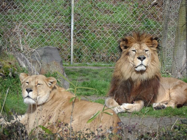 ma visite au zoo des Sables d'Olonne Sam_0022
