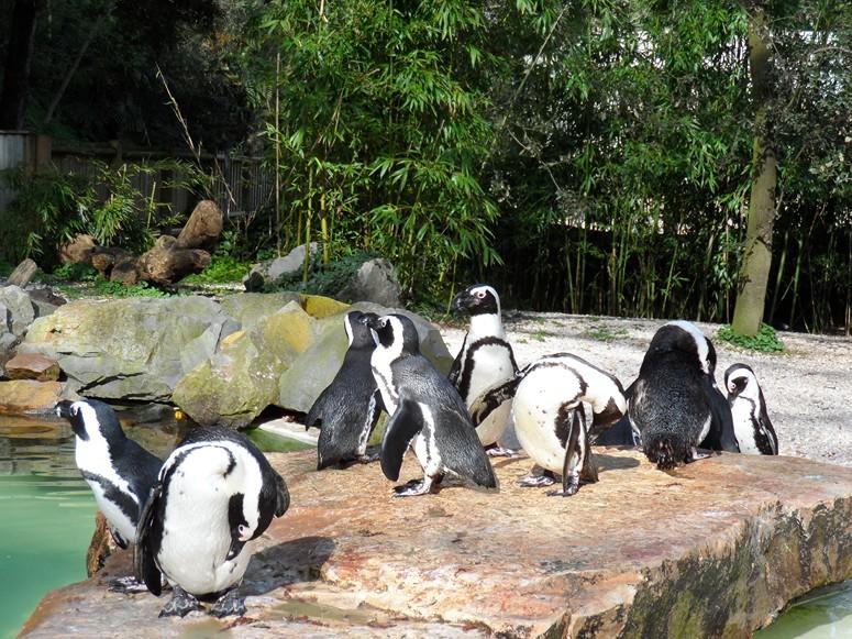 ma visite au zoo des Sables d'Olonne Sam_0112