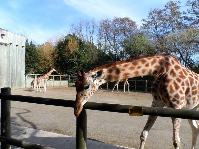 ma visite au zoo des Sables d'Olonne Sam_0113