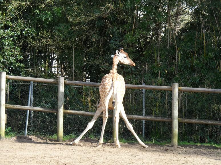 ma visite au zoo des Sables d'Olonne Sam_0116