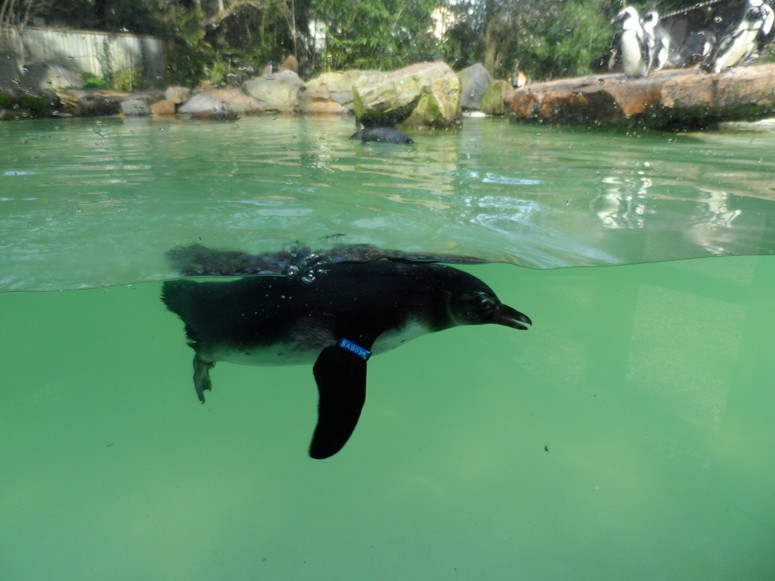 ma visite au zoo des Sables d'Olonne Sam_0117