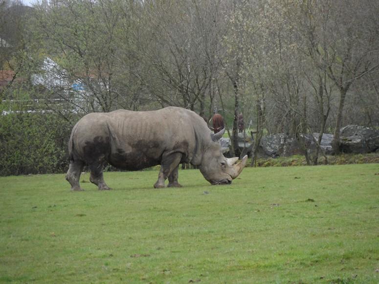 ma visite au zoo des Sables d'Olonne Sam_0310