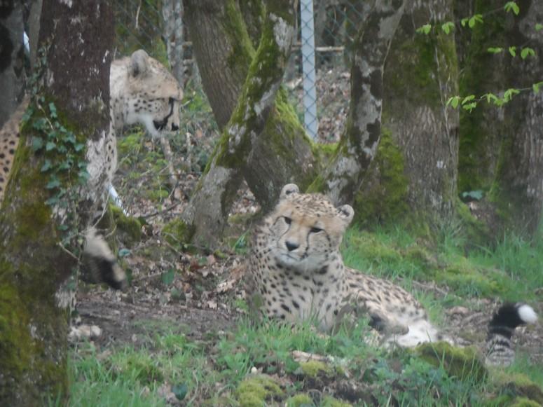 ma visite au zoo des Sables d'Olonne Sam_0311
