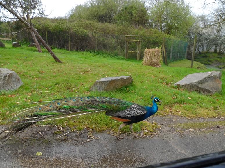 ma visite au zoo des Sables d'Olonne Sam_0410