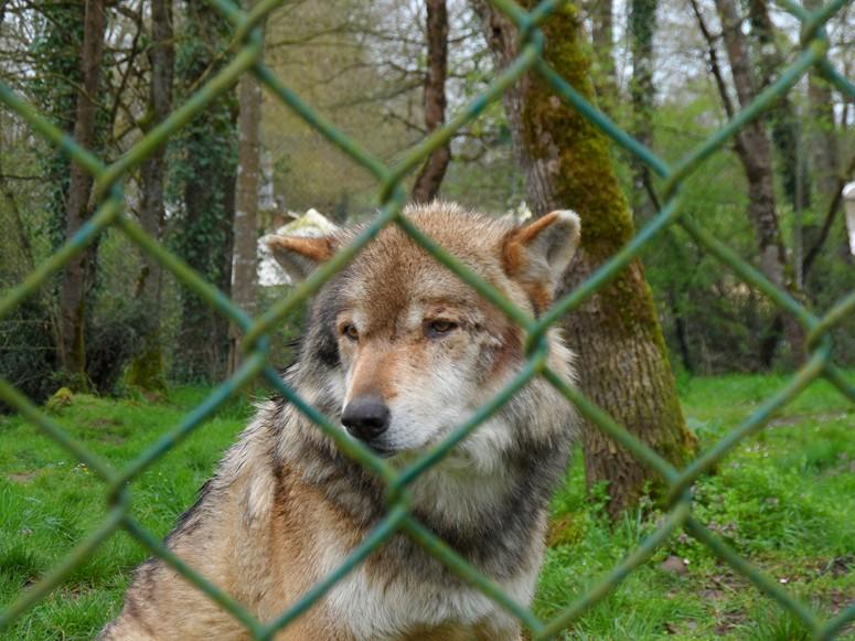 ma visite au zoo des Sables d'Olonne Sam_0411