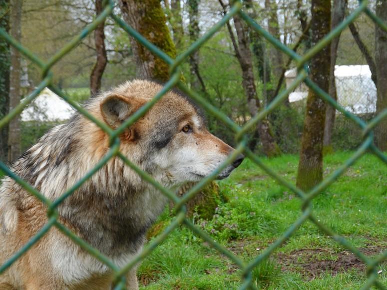 ma visite au zoo des Sables d'Olonne Sam_0412